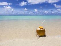 Koks na plaży Obraz Royalty Free