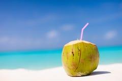 Koks na tropikalnej plaży Obrazy Stock