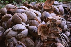 Koks przy Port Vila w Vanuatu zdjęcia stock