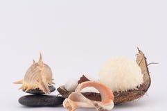 Koks, skorupy i Kokosowi cukierki, Fotografia Stock