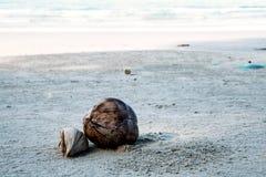 Koks suchy na plaży fotografia royalty free