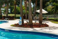 Koks zieleni drzewka palmowe pod s?o?cem, basen z b??kitne wody, tropikalny pi?kny t?o Lato, turystyka, wakacje obraz royalty free