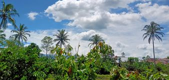Koksu krajobraz zdjęcie stock