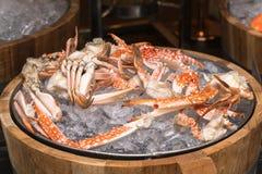 Kokt blå krabba på is Royaltyfri Foto