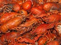 kokt crawfish Fotografering för Bildbyråer