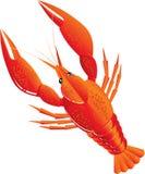 kokt crawfish Royaltyfria Foton
