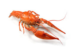 kokt crawfish Royaltyfria Foton