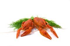Kokt Crawfish Arkivbild