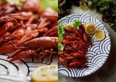 Kokt kräftalögn på ett uppläggningsfat Skaldjur Näringsrik och sund matställe collage royaltyfria bilder