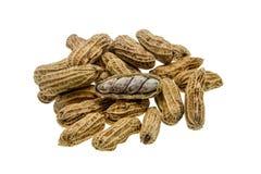 Kokta jordnötter på vit bakgrund Royaltyfri Fotografi