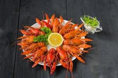Kokta röda kräftor på en vit maträtt, bästa sikt Royaltyfri Fotografi