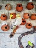 Koktajl papuga Piękna obrazy stock