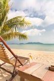 koktajli/lów drzewa palmowi relaksujący Obraz Royalty Free