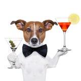 Koktajlu Martini psi szkła fotografia royalty free