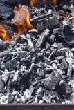 kol från träden royaltyfri bild