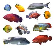 Kolaż denna egzot ryba na białym tle odizolowywającym Fotografia Stock