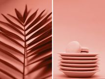 Kolaż fotografie koralowy kolor z palm macaroons i gałąź fotografia stock