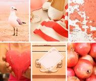 Kolaż fotografie w różowych kolorach obrazy stock