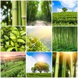 Kolaż fotografie z bambusowym lasem i plantacją Zdjęcia Royalty Free