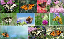 Kolaż jaskrawi kolorowi motyle obraz stock