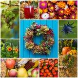 Kolaż kolorowi jesień obrazki zdjęcia stock