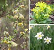 Kolaż kwiaty i kwiecenie gałąź Zdjęcie Stock