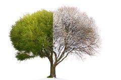 Kolaż mieszający drzewny wizerunek składał się lata i zimy kotelni normę obraz royalty free