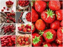 Kolaż mieszane czerwone truskawkowe jagody Pojęcie Obrazy Royalty Free