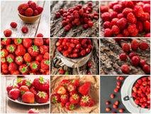 Kolaż mieszane czerwone truskawkowe jagody Pojęcie Zdjęcie Stock