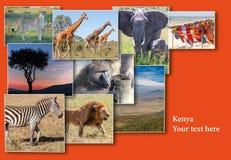 Kolaż od wizerunków przyroda i piękny zmierzch w Kenja Afryka Zdjęcie Stock
