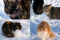 Kolaż przybłąkani bezdomni koty w zimie na ulicie Obrazy Royalty Free