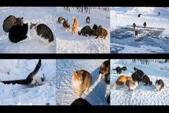 Kolaż przybłąkani bezdomni koty w zimie na ulicie Zdjęcia Stock