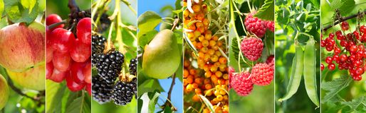 Kolaż różnorodne owoc i jagody zdjęcia royalty free