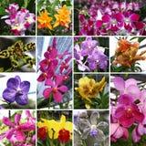 Orchide kolaż Obrazy Royalty Free