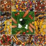 Kolaż zrobił †‹â€ ‹jedlinowe i Bożenarodzeniowe dekoracje fotografia royalty free