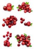 kolażu cranberry Fotografia Royalty Free