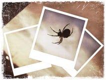 kolażu polaroidu pająk Zdjęcia Stock