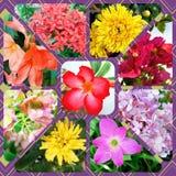 Kolaż kwiaty Fotografia Stock