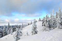 Kola parka narodowego Kolin kansallispuisto Finlandia w zimie, Europa zdjęcie stock