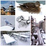 kolażu Geneva Switzerland zima Fotografia Royalty Free