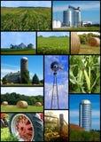 kolażu gospodarstwo rolne Zdjęcia Stock