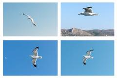 Kolażu seagull Obrazy Stock