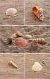 kolażu seashell Obrazy Royalty Free