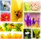 kolaż wiosna Fotografia Royalty Free