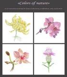 kolaży kwiaty Zdjęcie Royalty Free