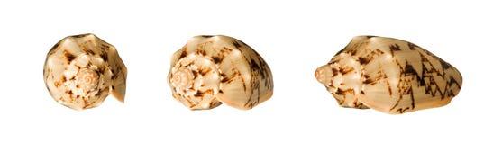 kolaży seashells Fotografia Stock