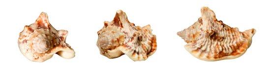 kolaży seashells Zdjęcia Stock