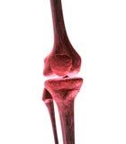 kolano ból ilustracja wektor