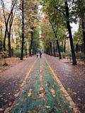 Kolarstwa droga przemian podczas jesień czasu - liście na ziemi zdjęcia royalty free