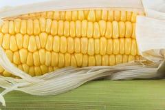 kolby kukurydzy żółty Zdjęcia Royalty Free